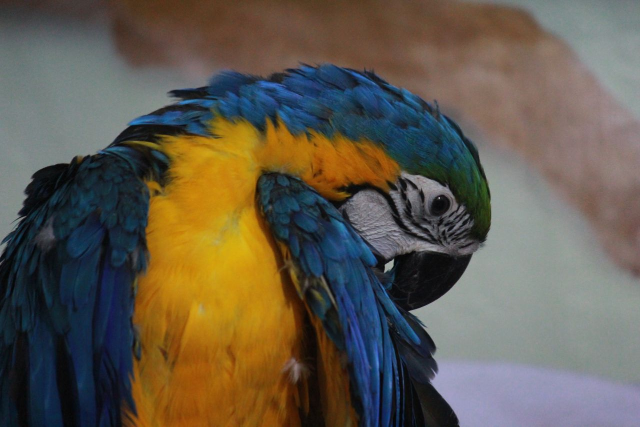 Blue and yellow macaw parrots at the lake by bike