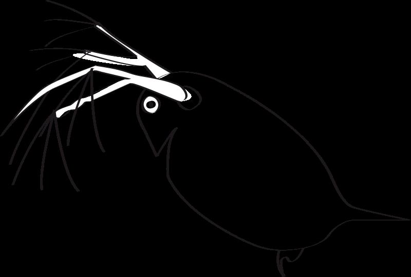 Free Clip Art Puce D Eau By Presquesage