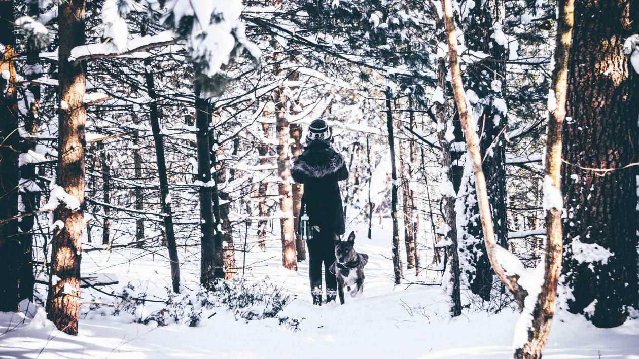 "Free photo ""Winter Daze"""