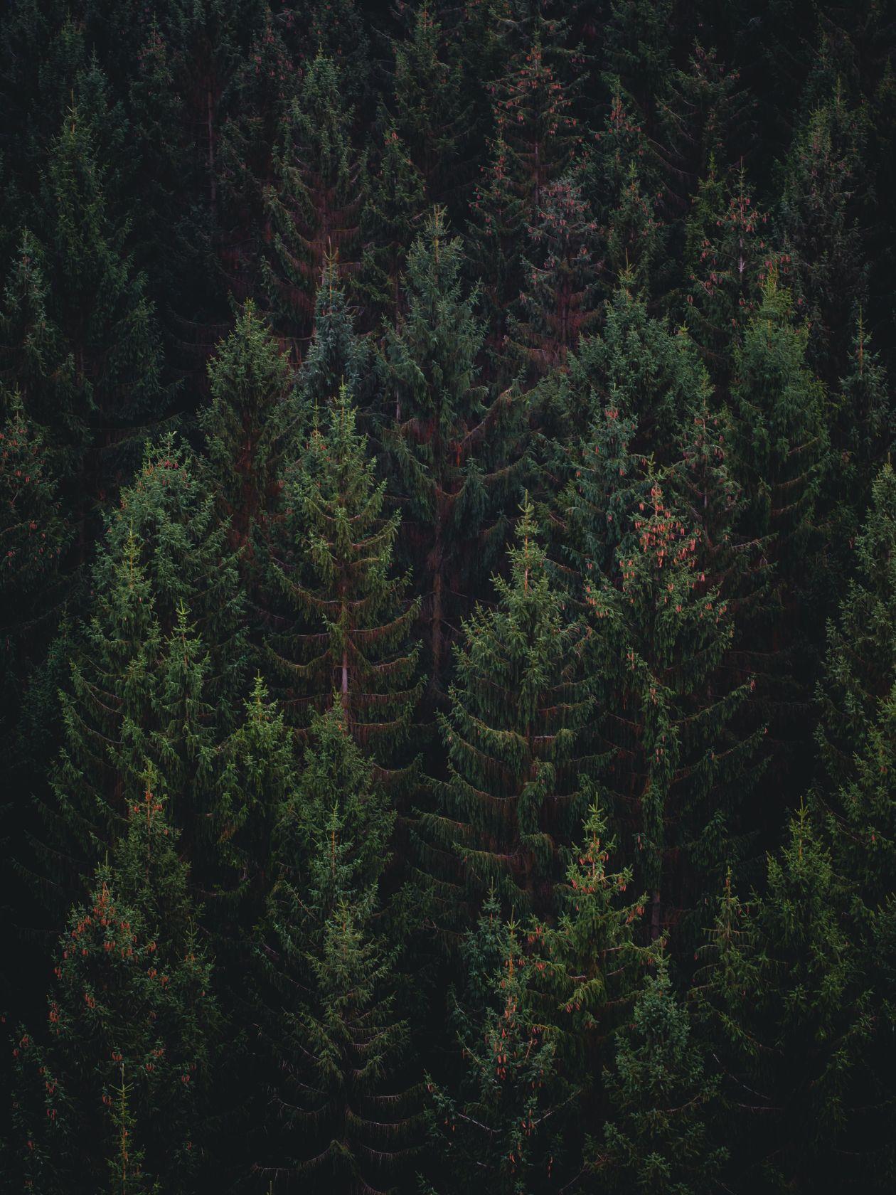 """Free photo """"Tree"""" by Andras Vas"""