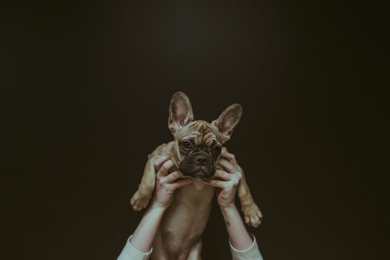 "Free photo ""Dog"" by Brooke Cagle"