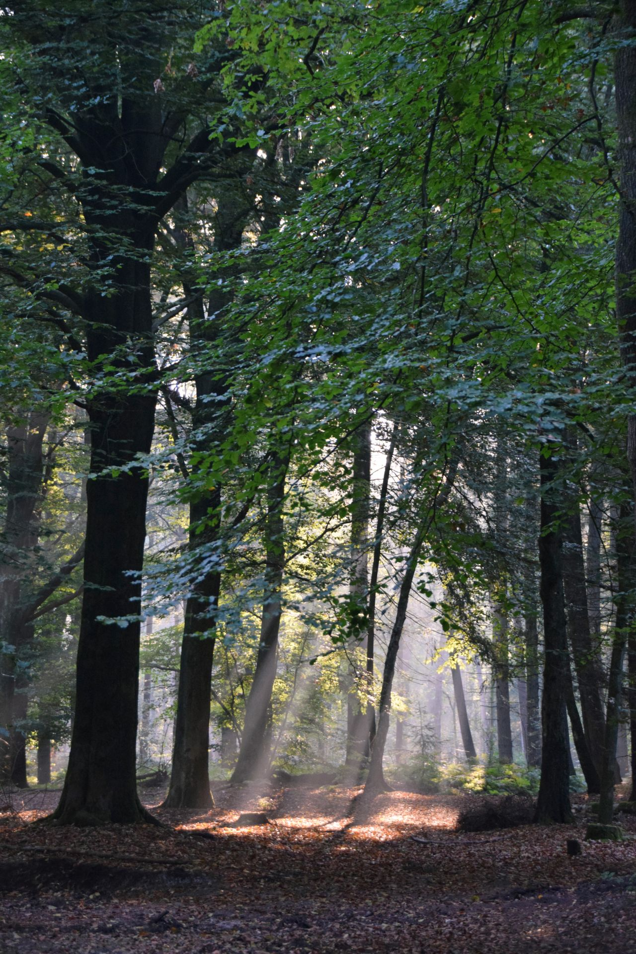 """Free photo """"Forest"""""""
