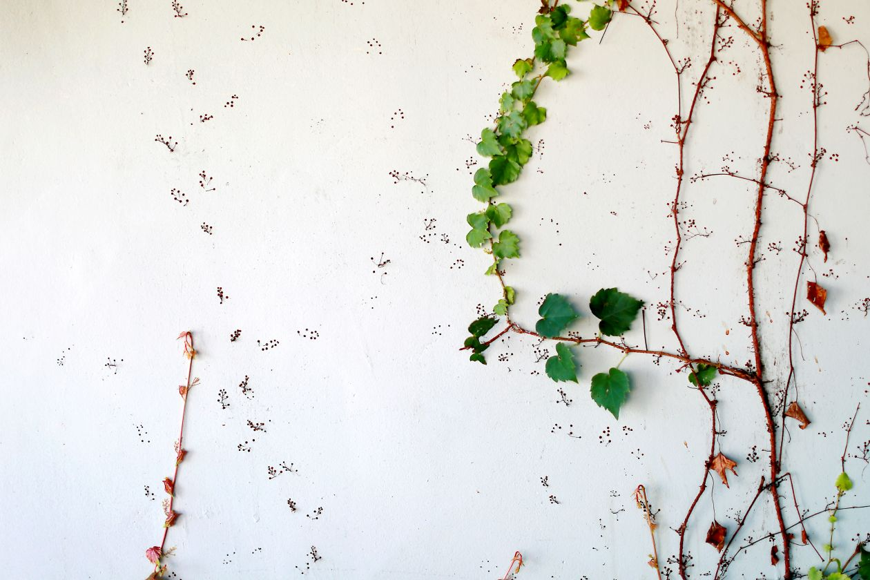 "Free photo ""Wall"" by adamara"