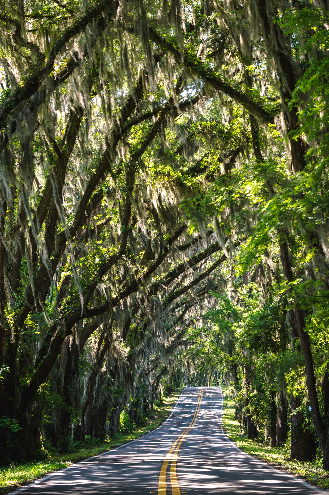 """Free photo """"Tallahassee"""" by Colin Abbey"""