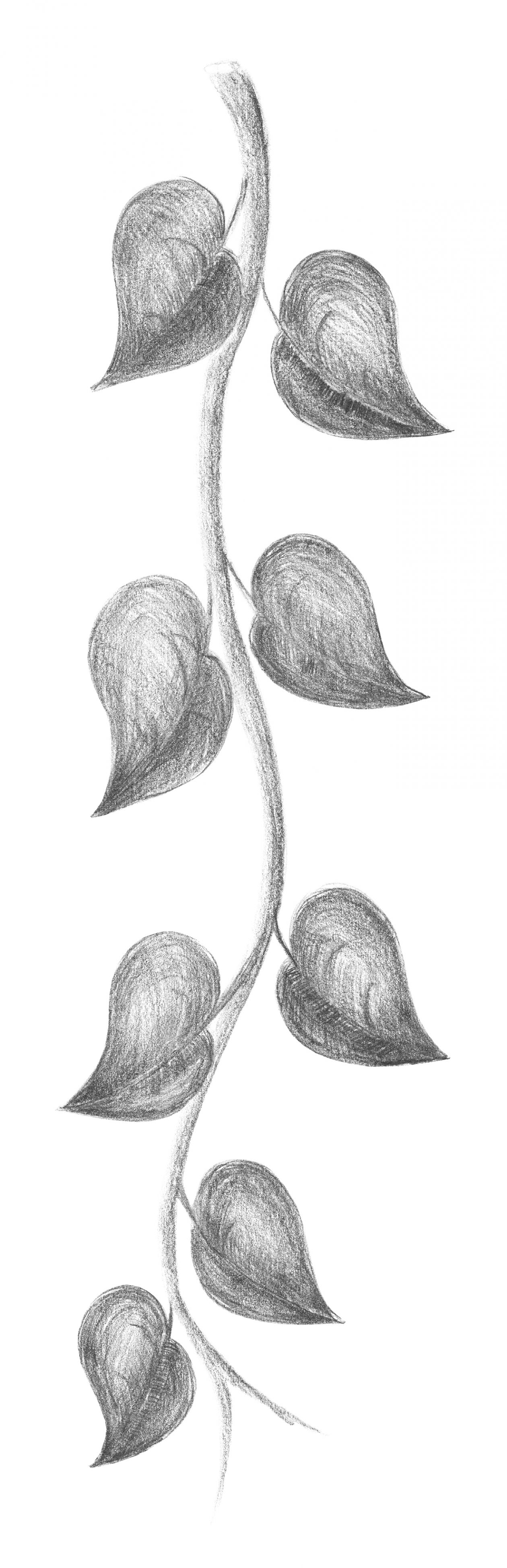 """Free photo """"Branch. Pencil sketch. Freehand drawing."""""""
