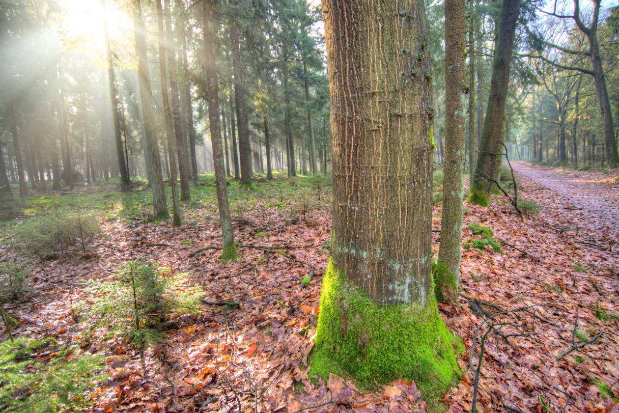 "Free photo ""Tree in the sun"""
