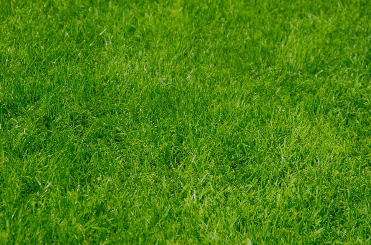 "Free photo ""Green grass field"""