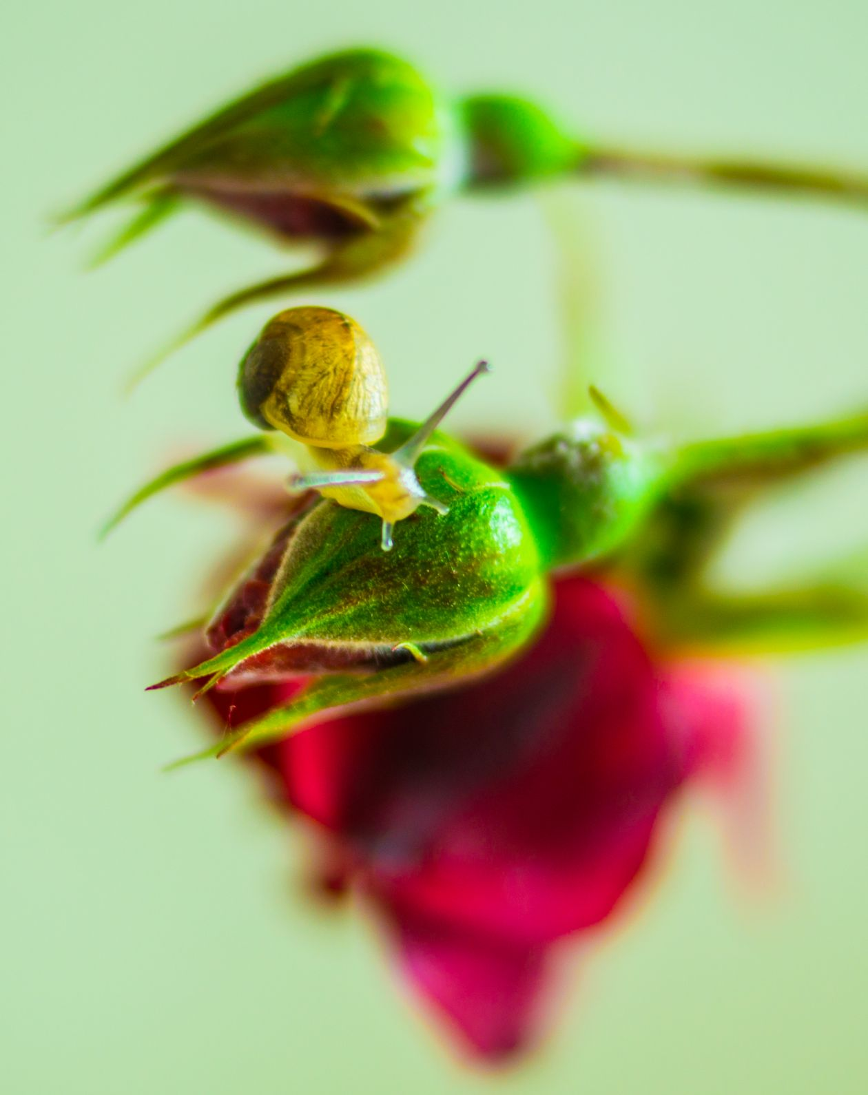 "Free photo ""Snail on the move"""
