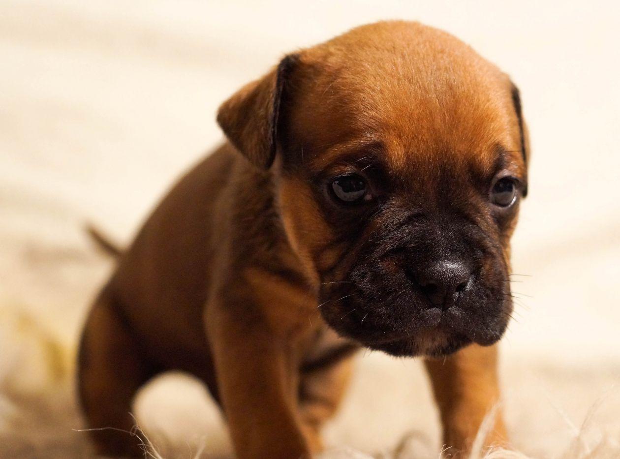 "Free photo ""Cute pup"""