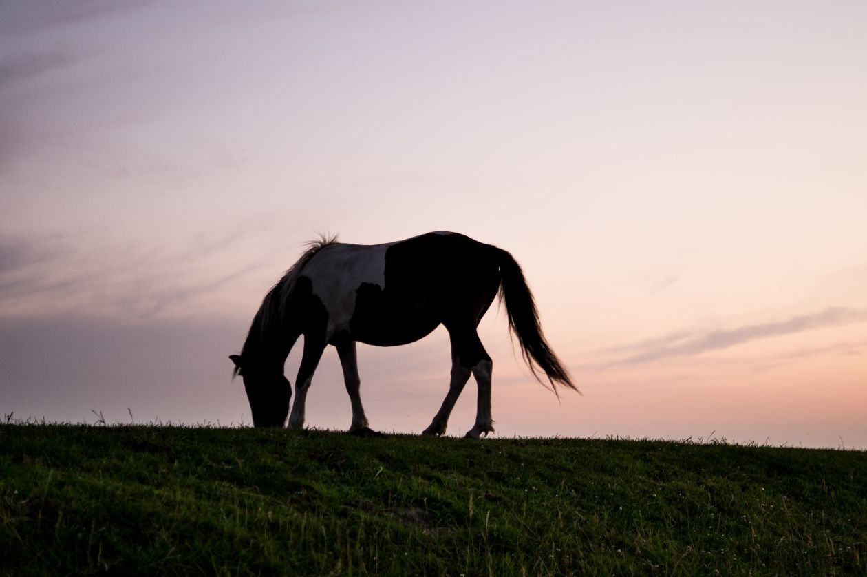 "Free photo ""Sunset horse"""