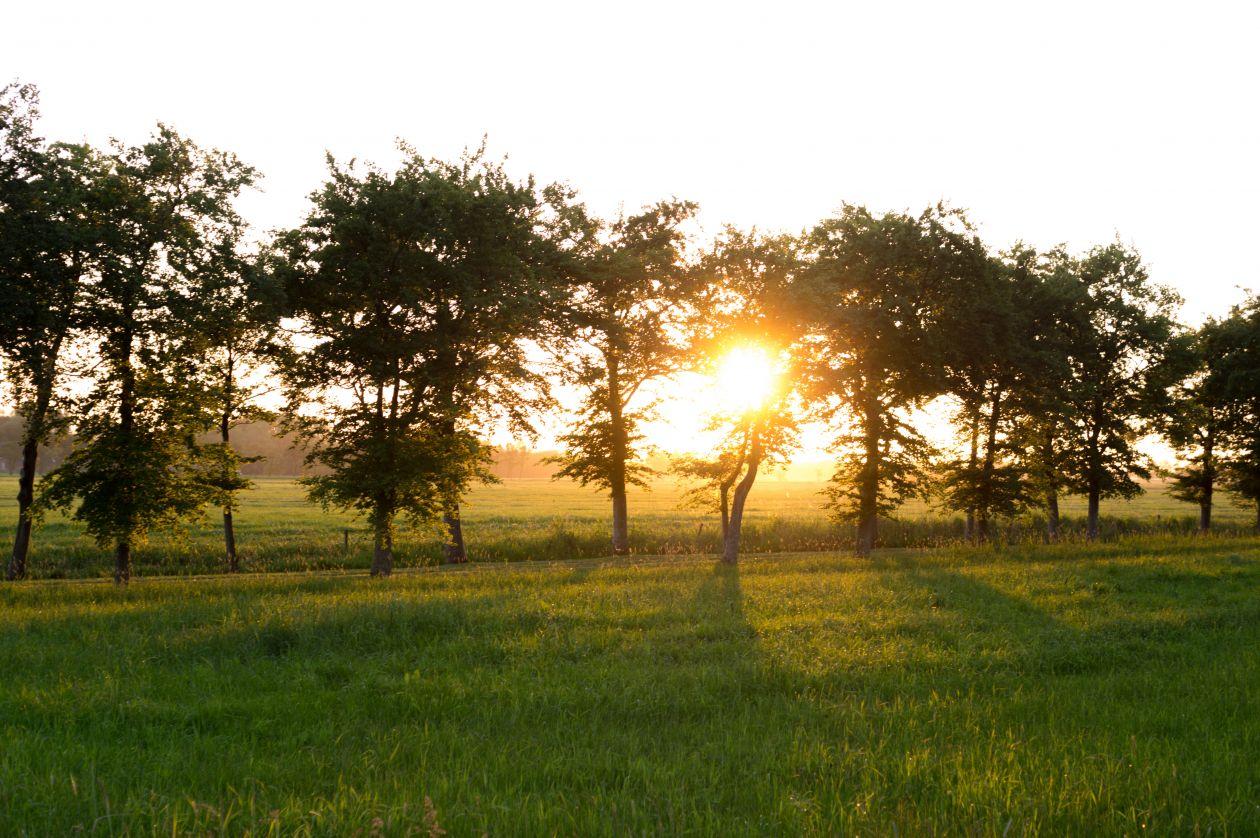 "Free photo ""Sunset through the trees"""