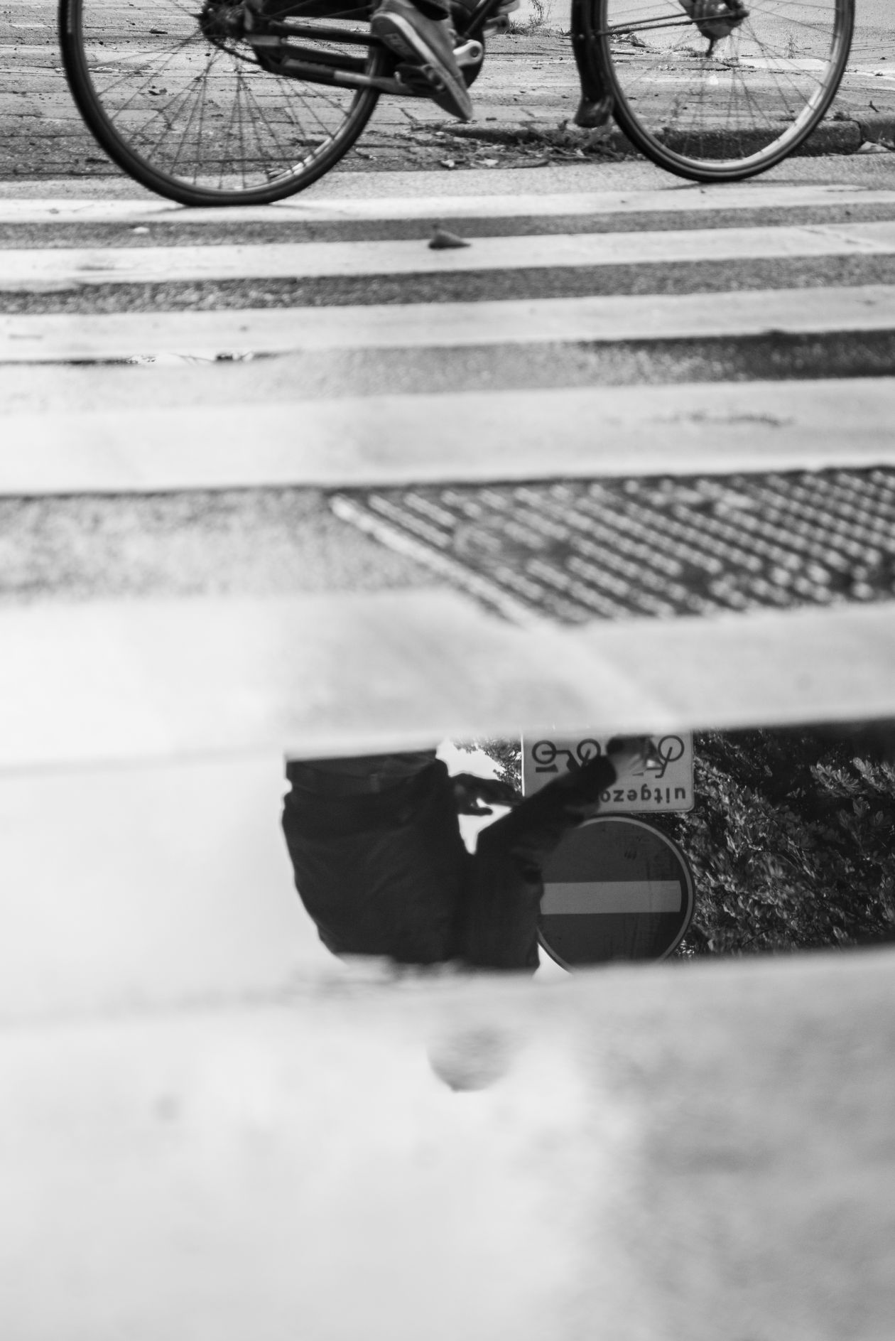 "Free photo ""Zebra reflection"""