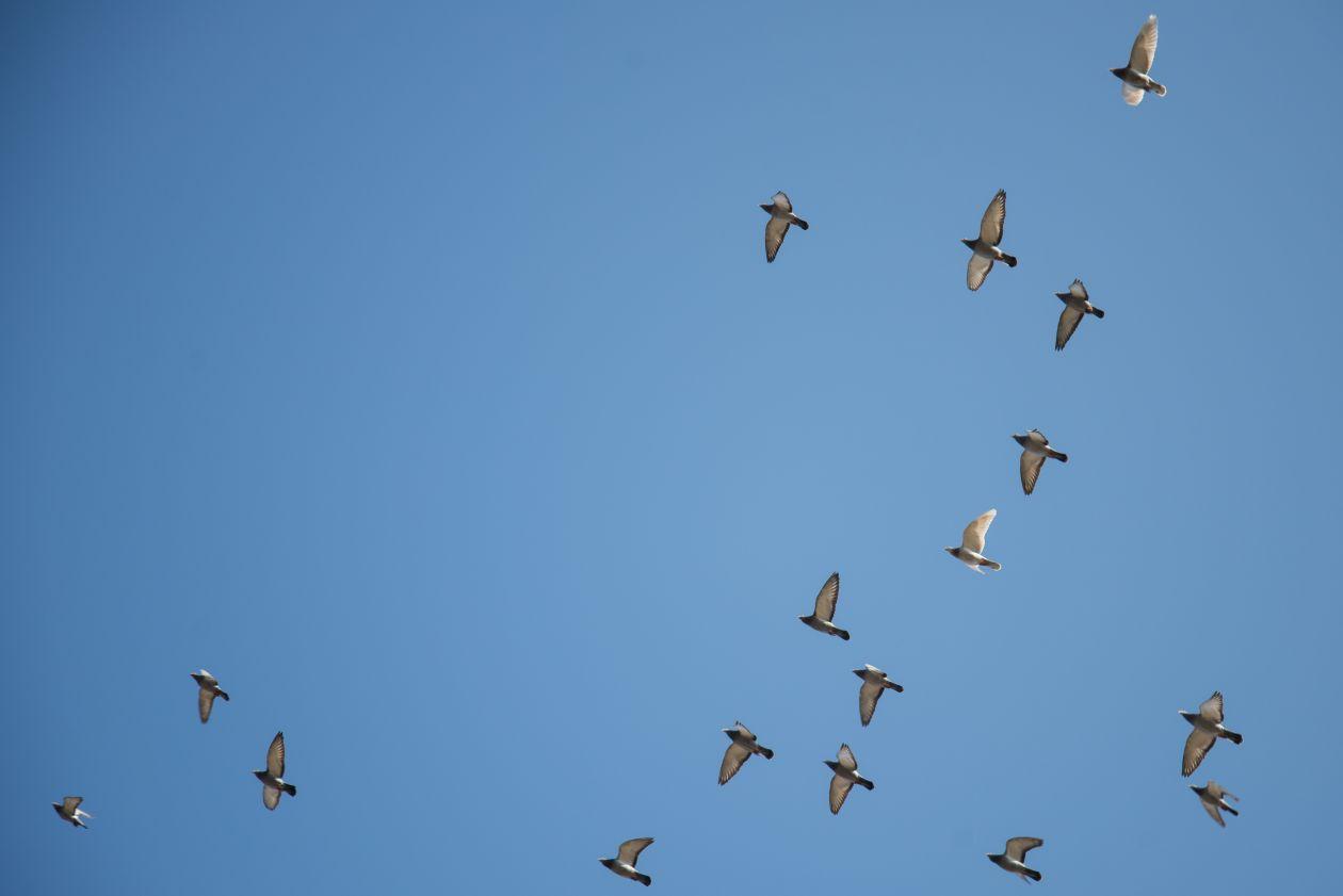 "Free photo ""Birds flying high"""