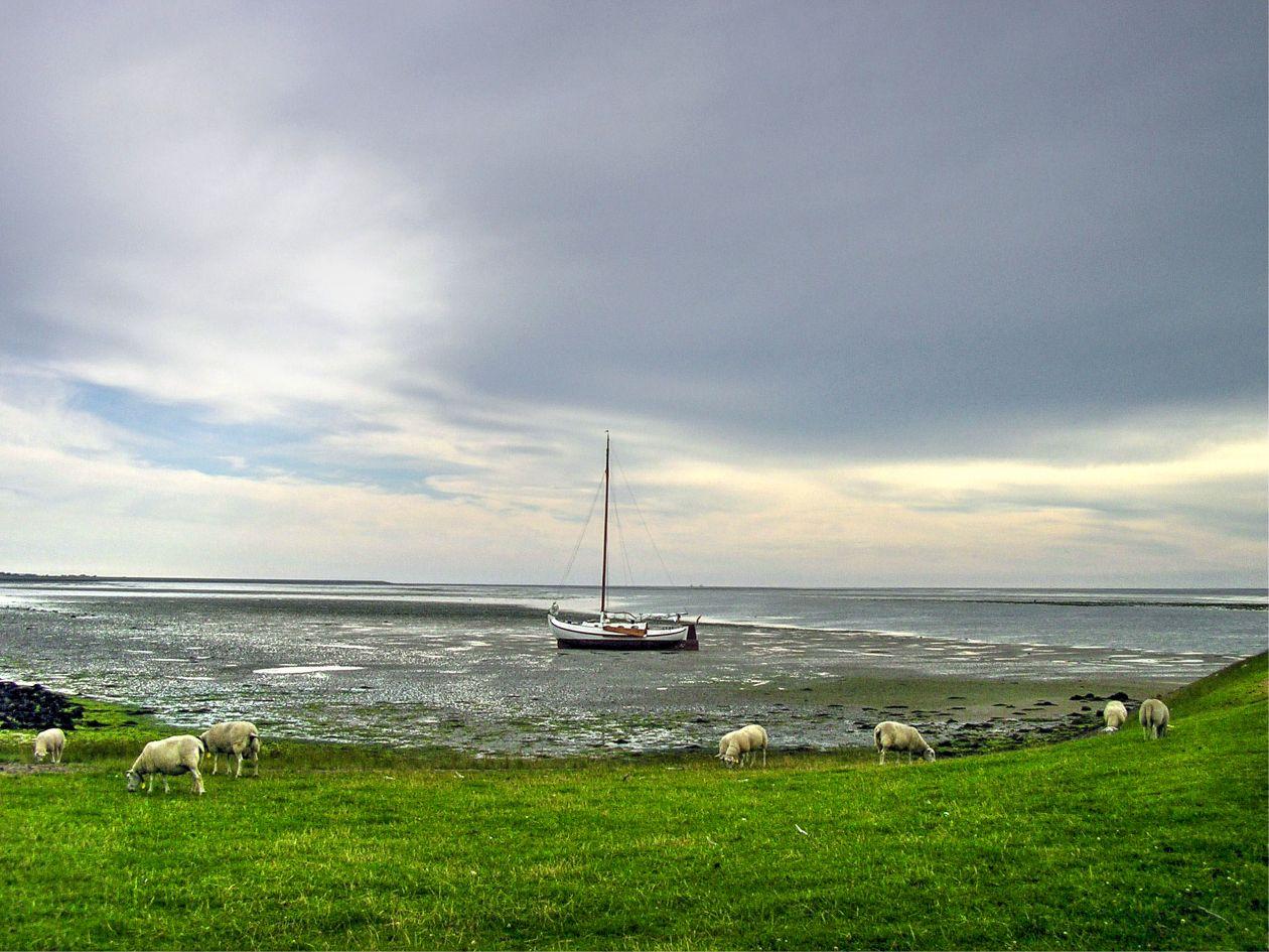 "Free photo ""Boat at Texel island"""