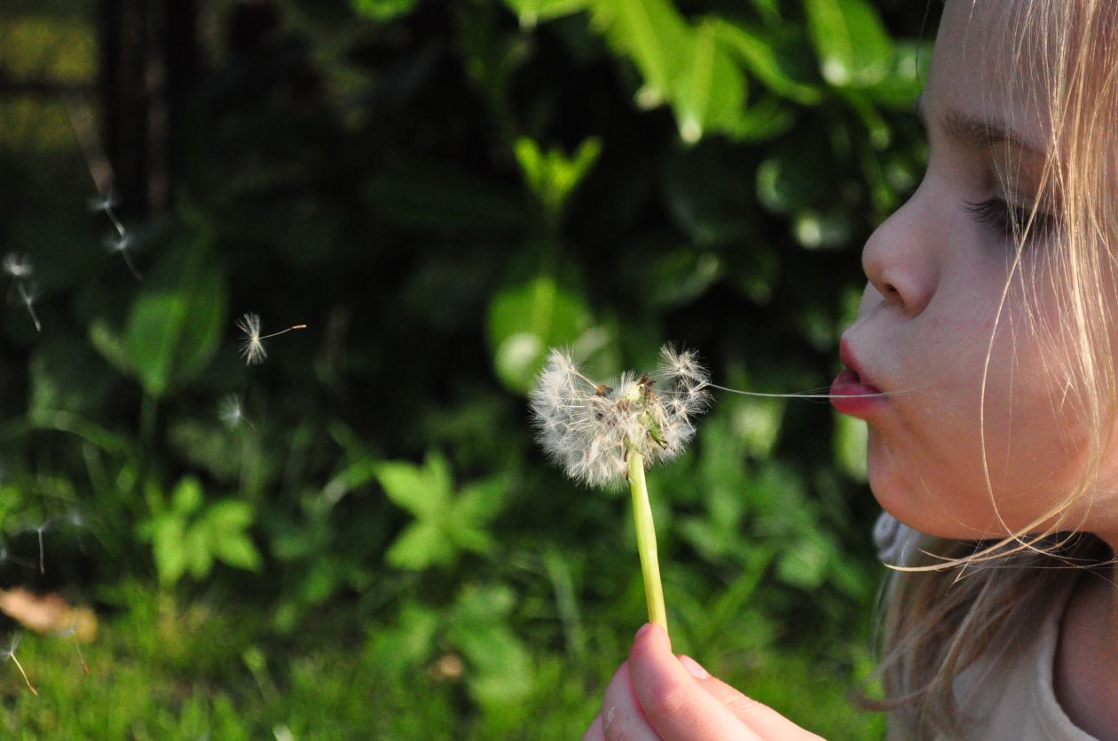 "Free photo ""Blowing dandelion"""