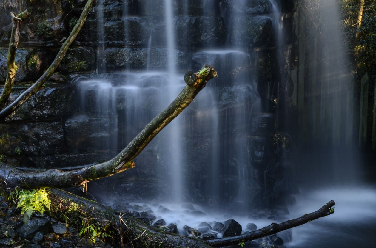 """Free photo """"Forest waterfall"""""""