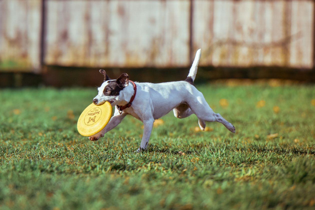 "Free photo ""Dog"" by Alexander Dummer"