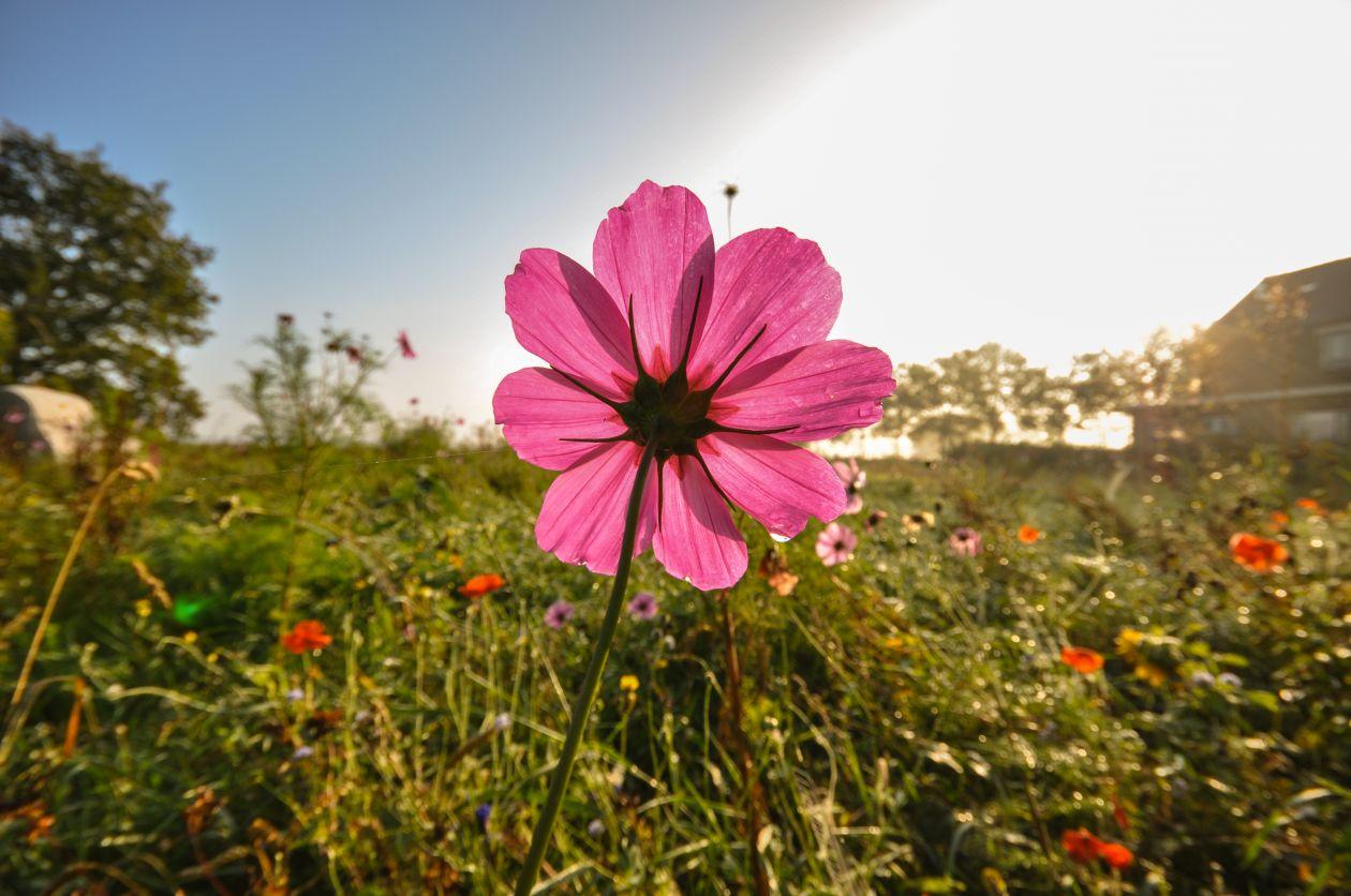 "Free photo ""Pink flower"""