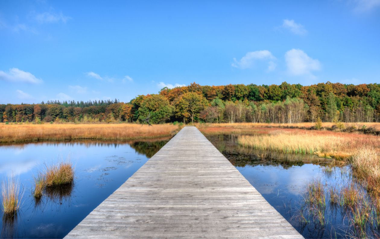 """Free photo """"Fall in Drenthe"""""""