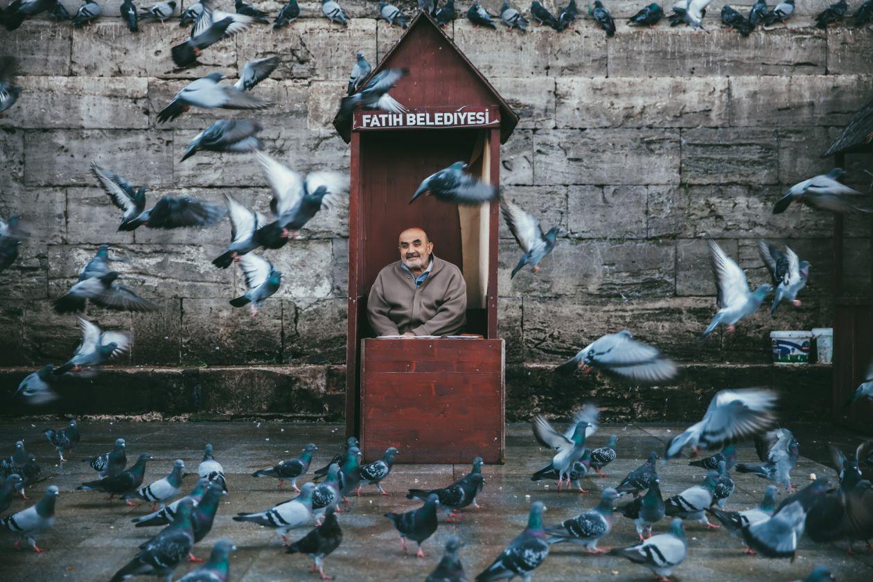 "Free photo ""Bird"" by Chalffy Chan"