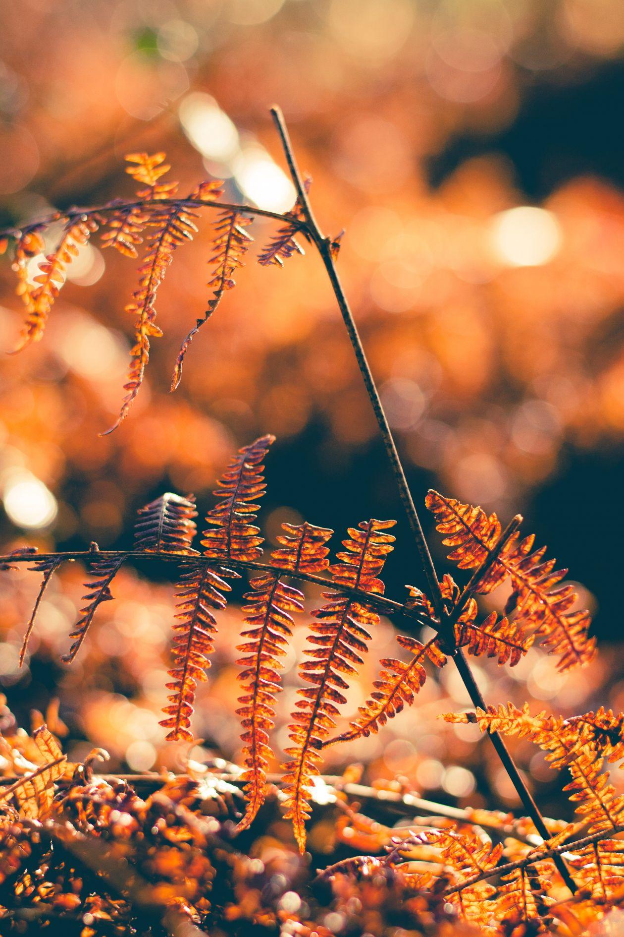 """Free photo """"Southampton"""" by Lizzie Guilbert"""