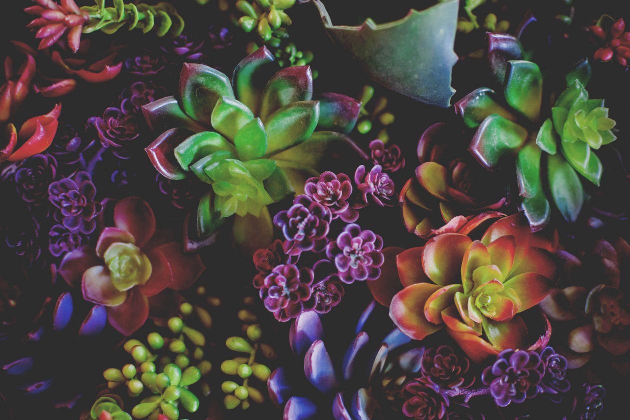 "Free photo ""Succulent"""