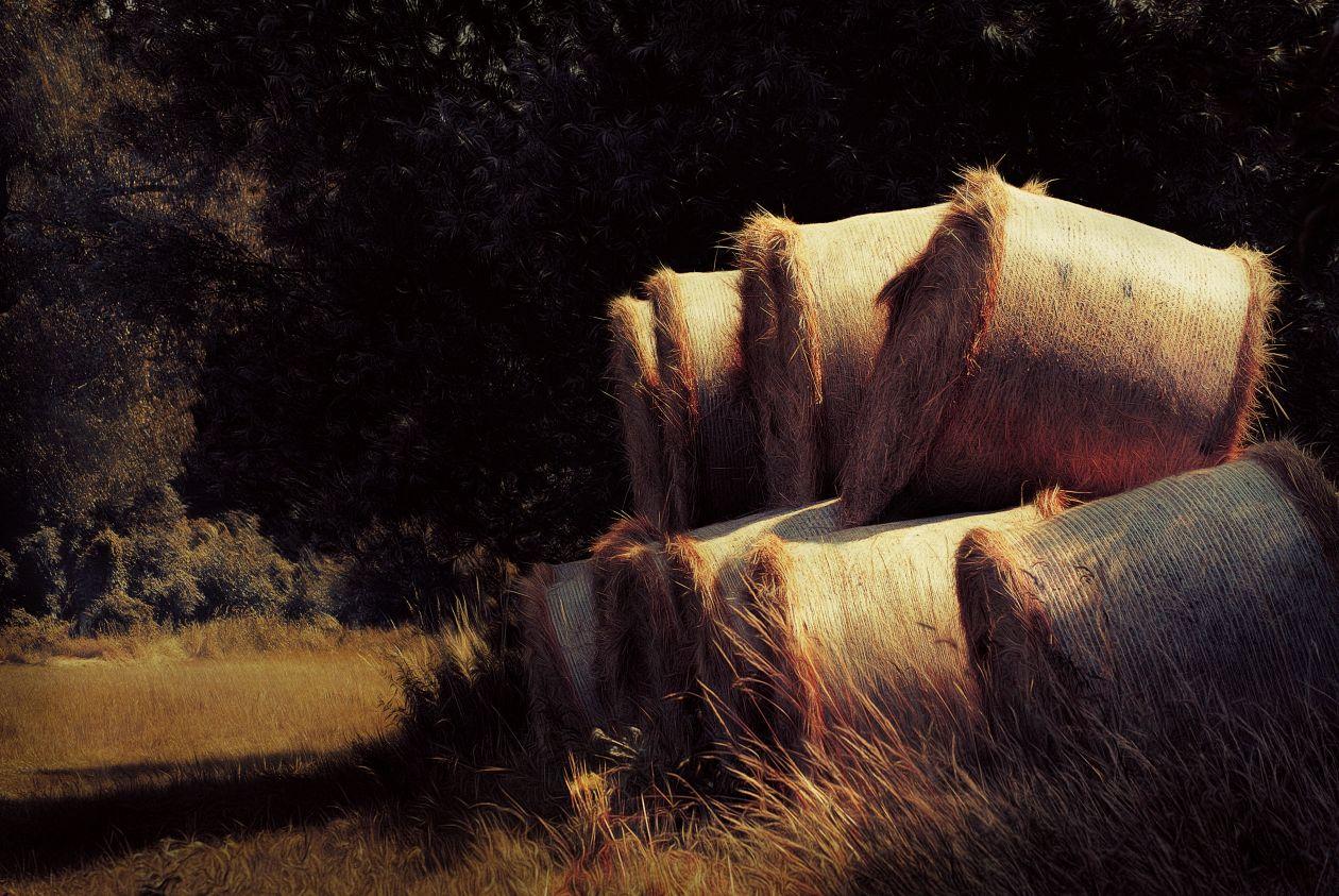 """Free photo """"Hay"""" by Nick Scheerbart"""