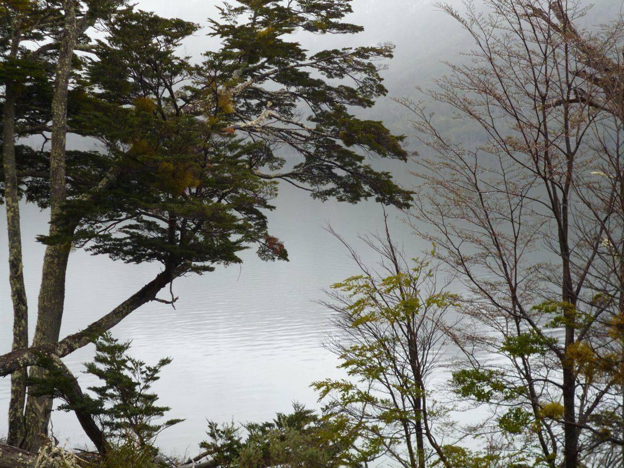 """Free photo """"Tree"""" by Facundo Loza"""