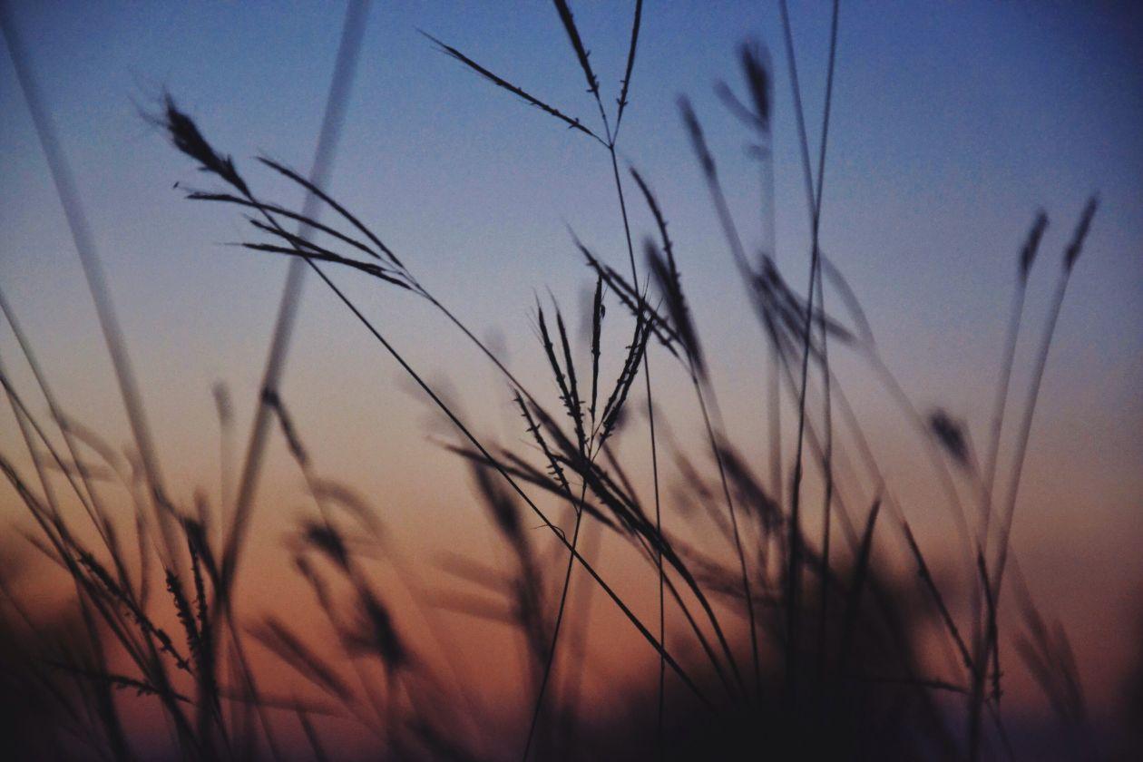 "Free photo ""Grass"" by Devan Freeman"