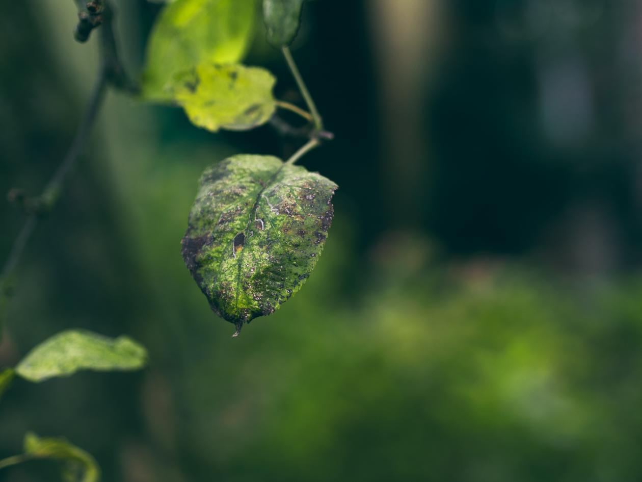 "Free photo ""Leaf"" by Denis Tunguz"