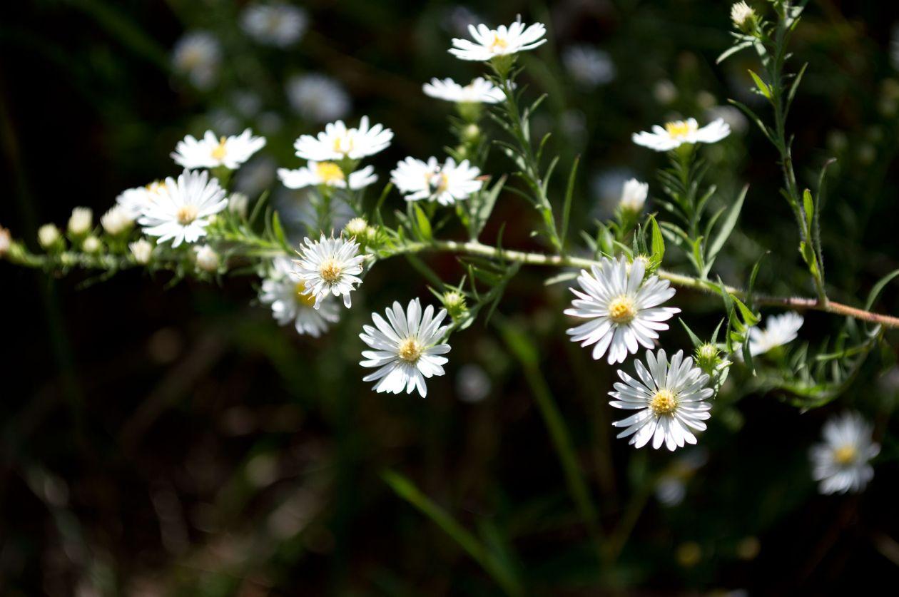 "Free photo ""Flower"" by John Murphy"