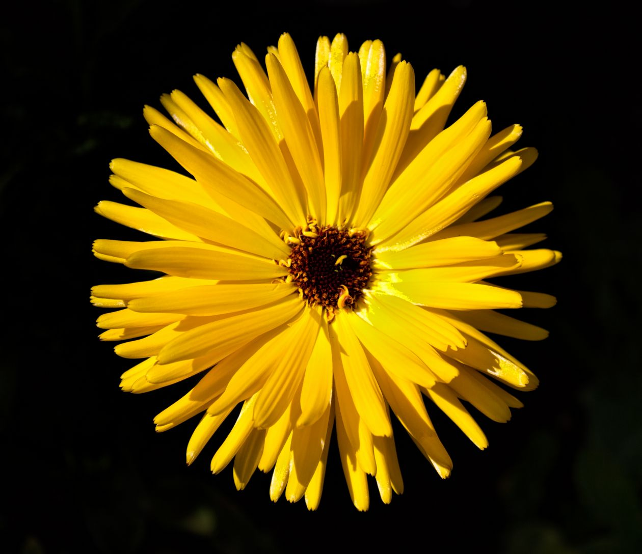 """Free photo """"Flower"""" by Bill Williams"""