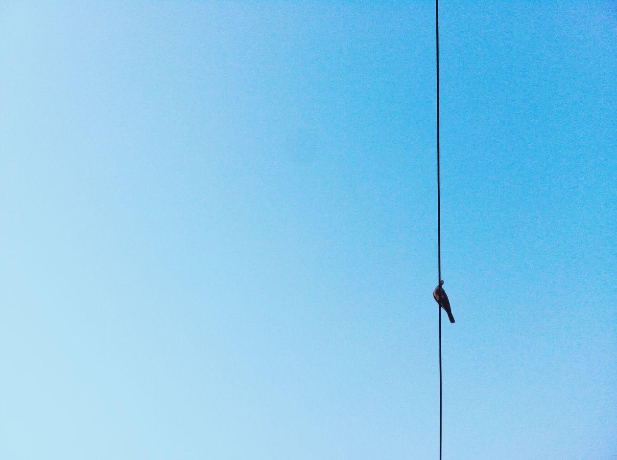 "Free photo ""Bird"" by Grethel Quintero"