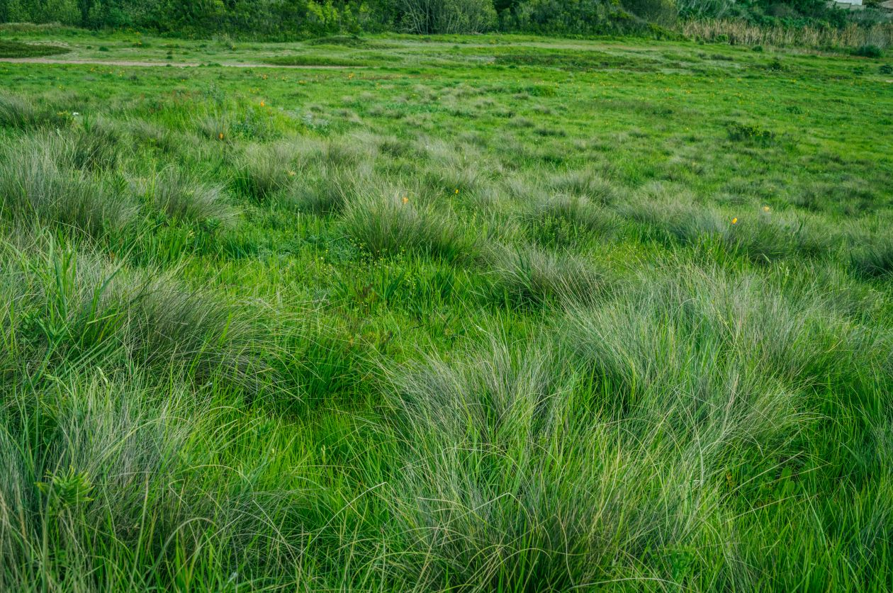 "Free photo ""Grass"" by juan manuel mendez"