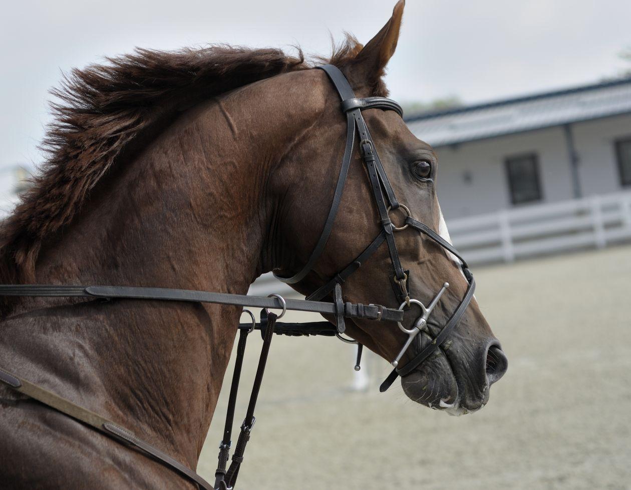"Free photo ""Horse"" by Violeta Pencheva"