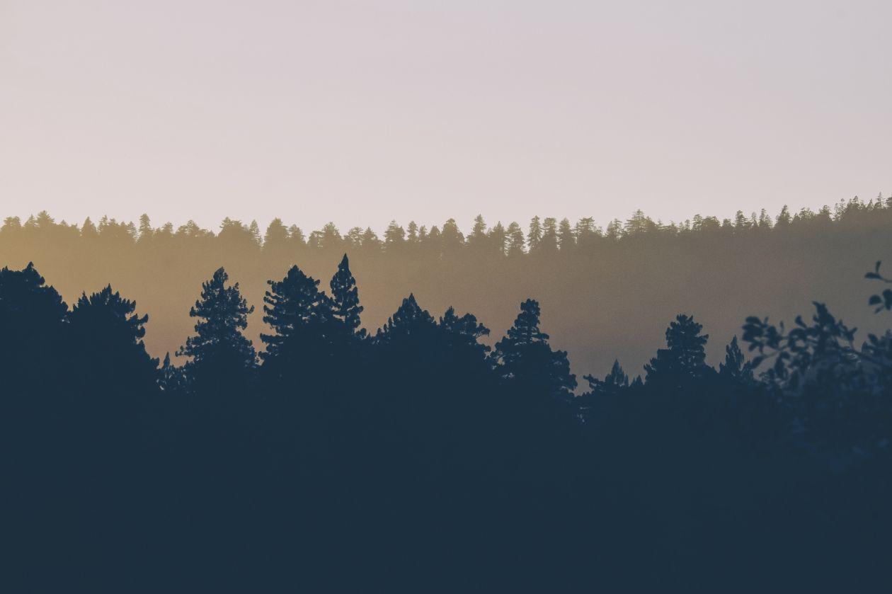 "Free photo ""Silhouette"" by Lou Levit"