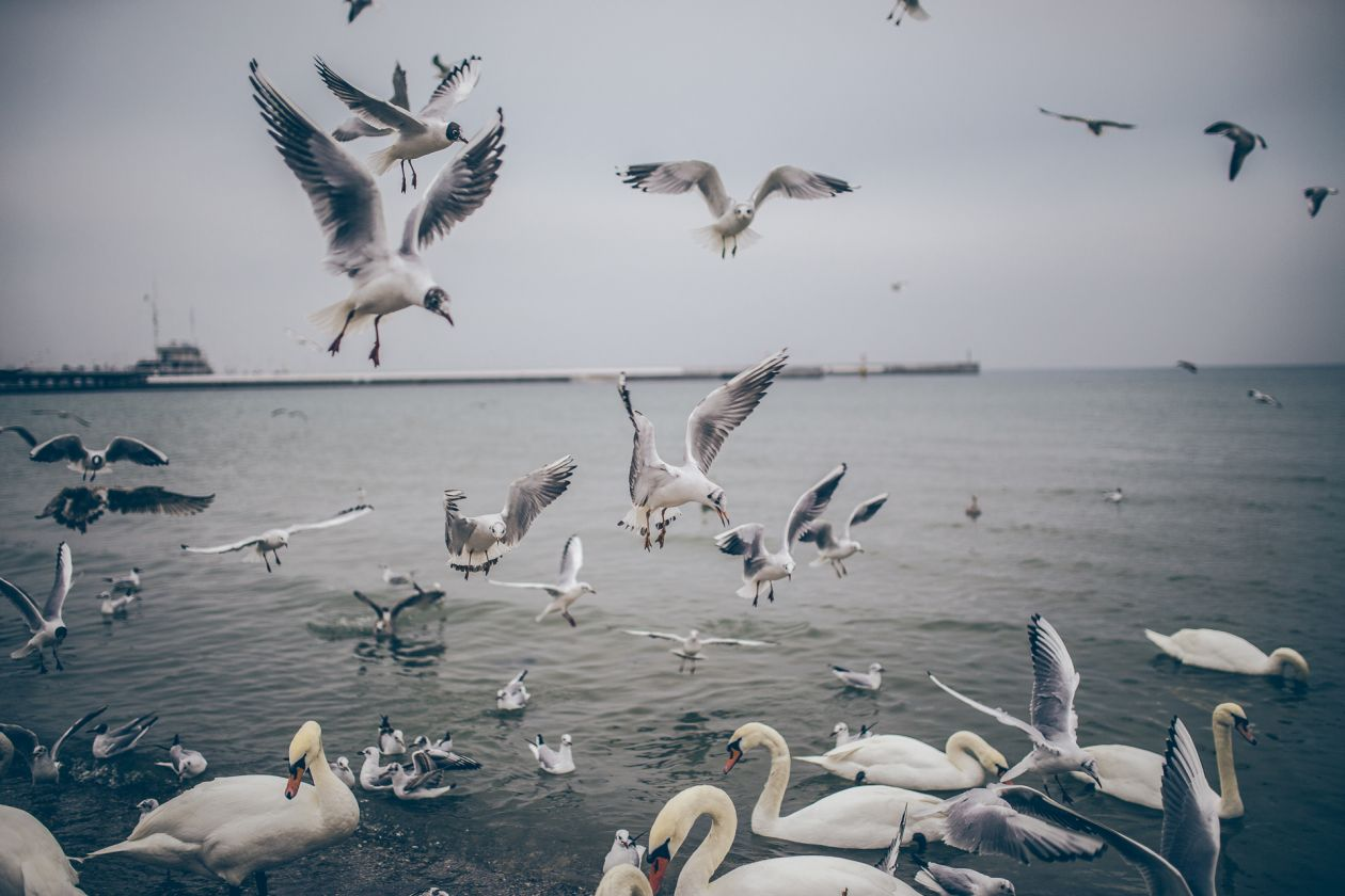 "Free photo ""Sopot"" by Patryk Sobczak"