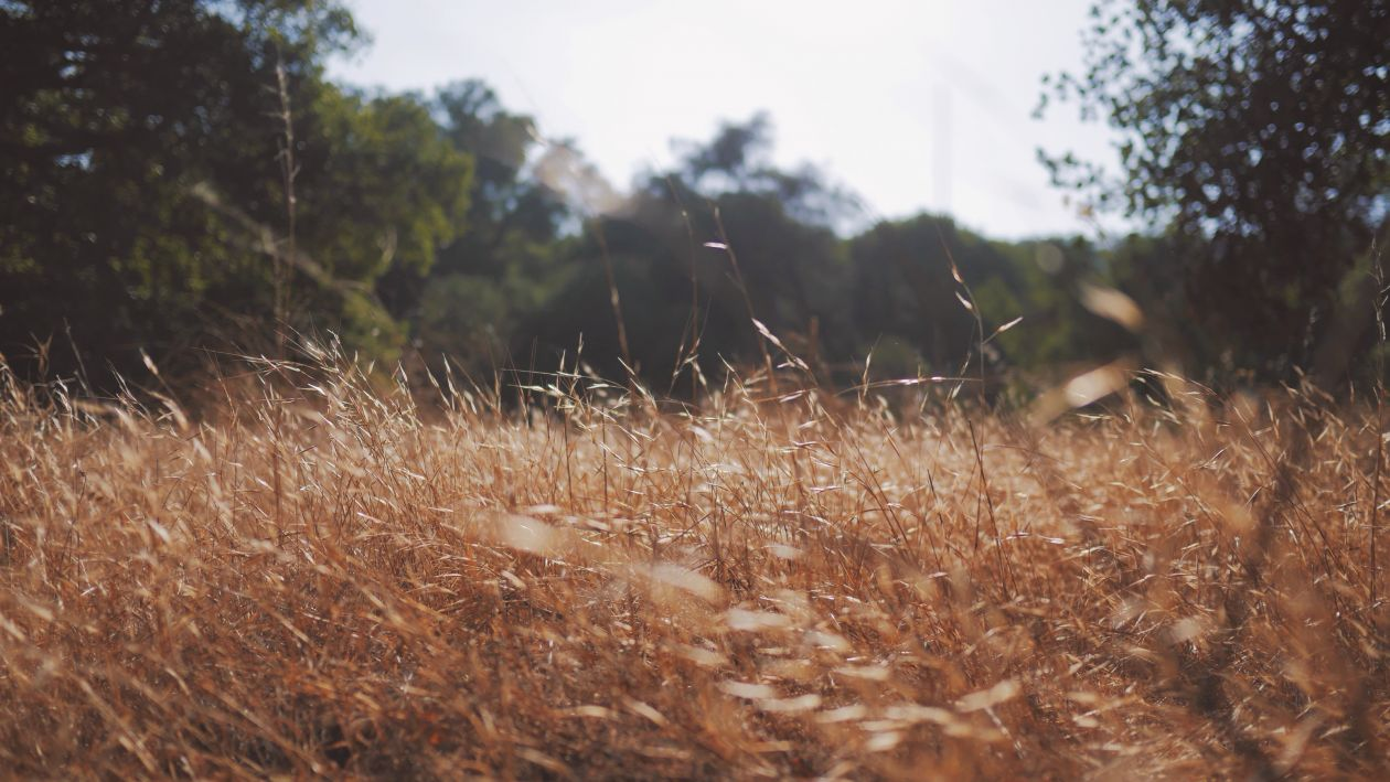 "Free photo ""Field"" by Cole Patrick"