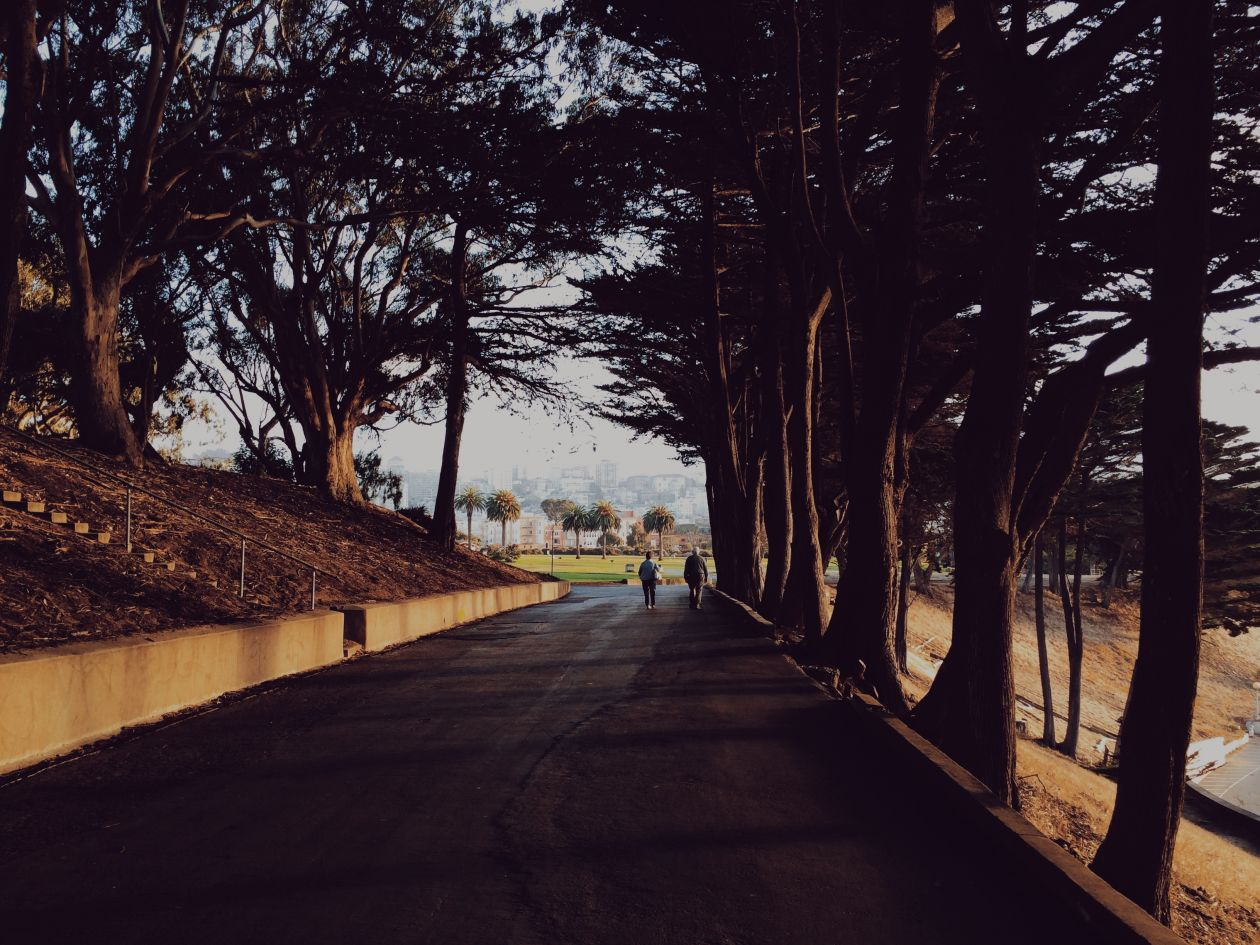 """Free photo """"Path"""" by Paula Borowska"""
