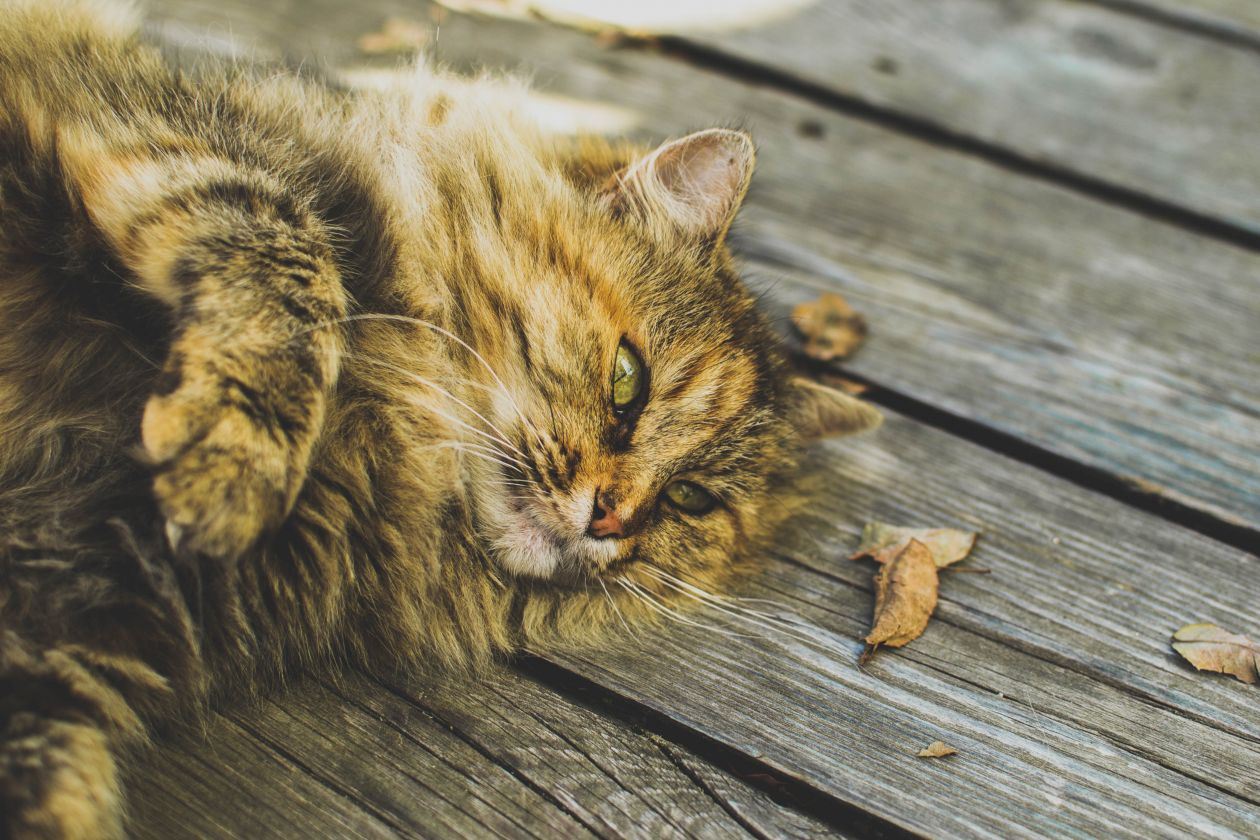 "Free photo ""Cat"" by Thomas Jarrand"