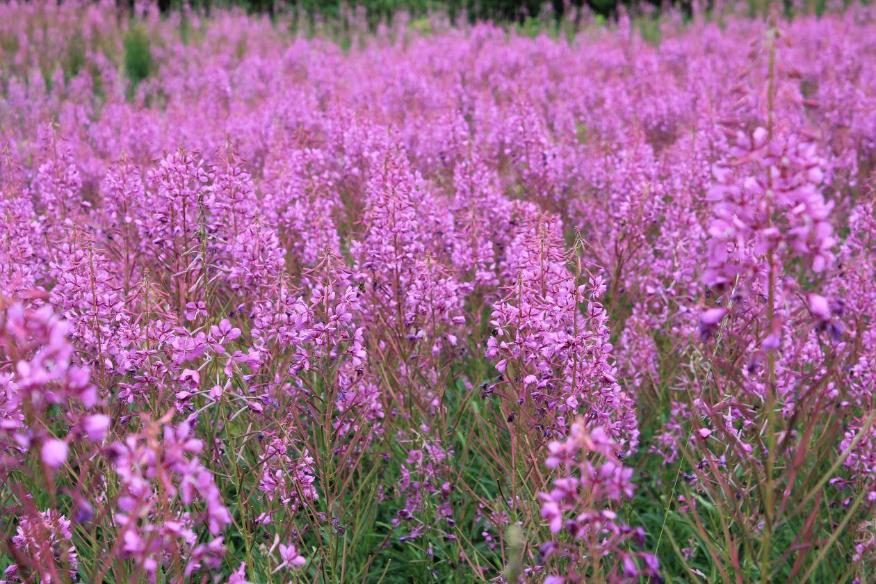 """Free photo """"Purple"""" by Patrick Van Stee"""