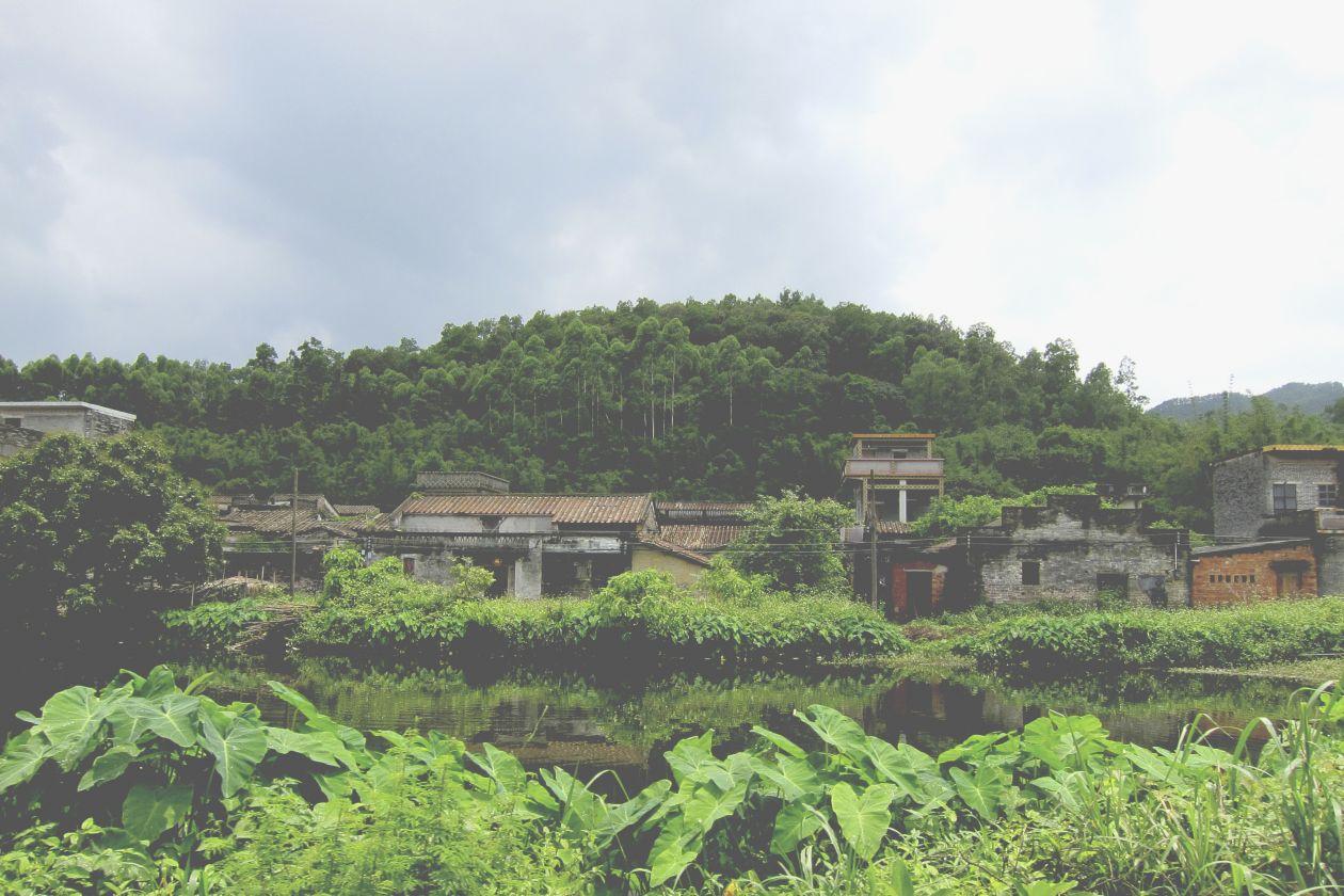 "Free photo ""Jungle"" by Virginia Choy"