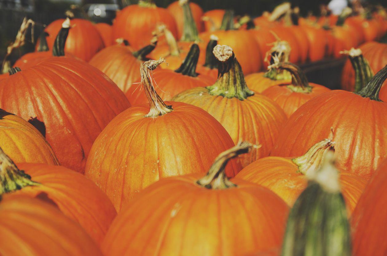 """Free photo """"Pumpkin"""" by Hide Obara"""