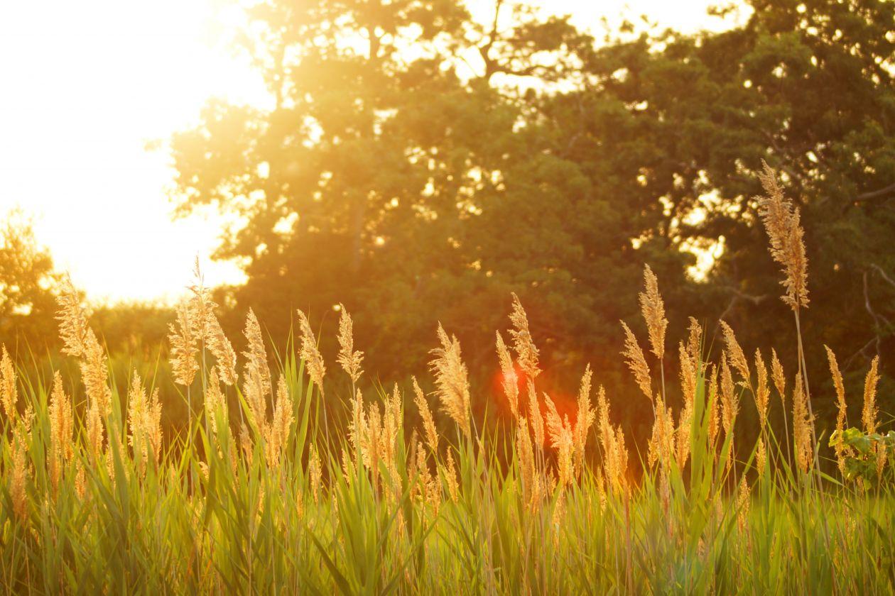 "Free photo ""Grass"" by Dakota Roos"