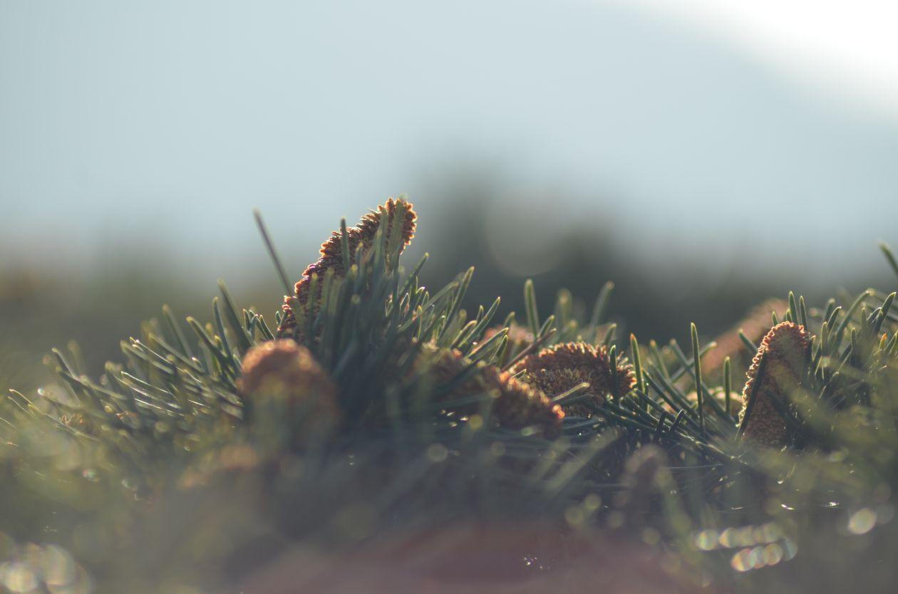 """Free photo """"Shimla"""" by Shivaraman Aiyer"""