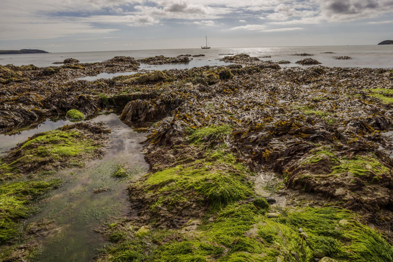 "Free photo ""Seaweed"" by Jez Timms"