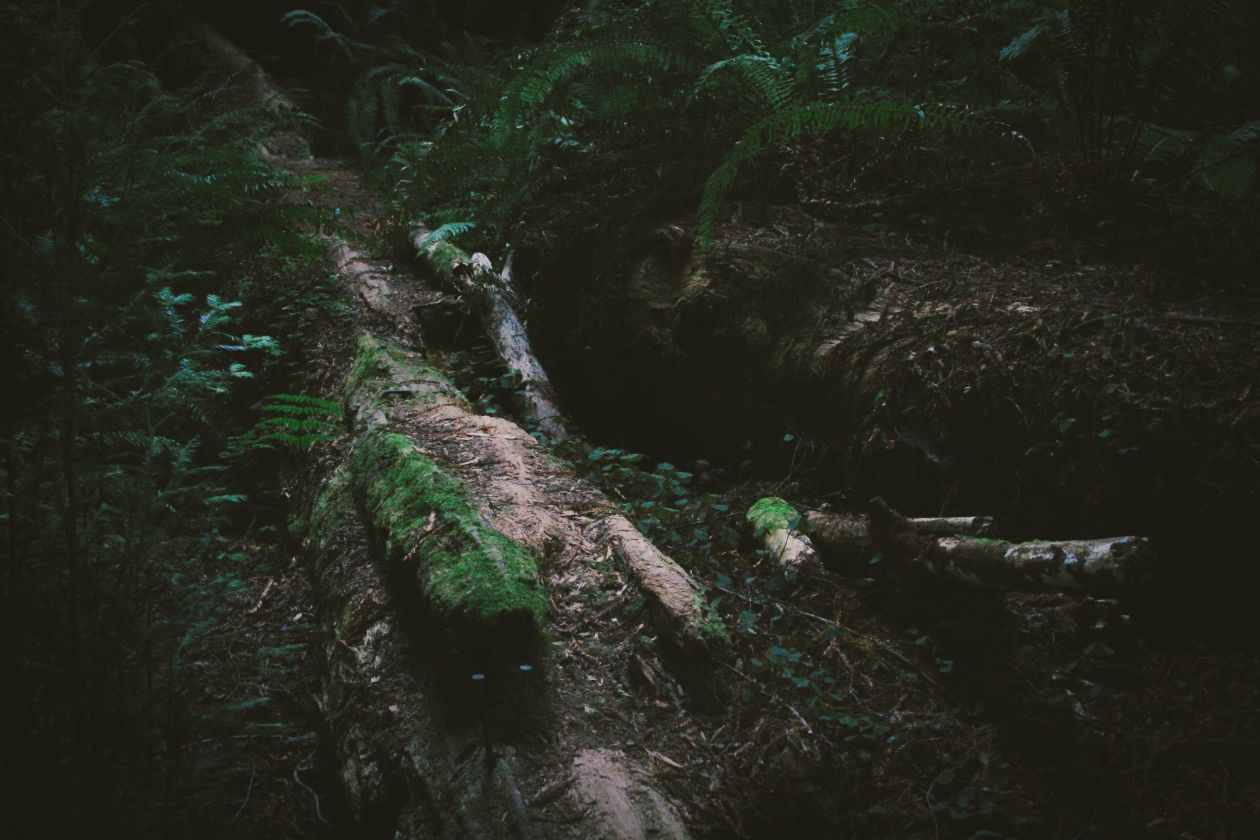 "Free photo ""Forest"" by Dustin Scarpitti"