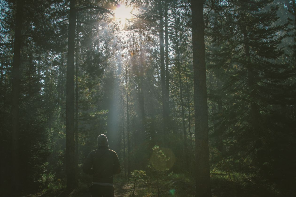 "Free photo ""Nature"" by Dustin Scarpitti"