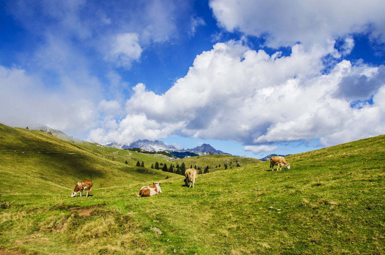 """Free photo """"Grazing"""" by Ales Krivec"""
