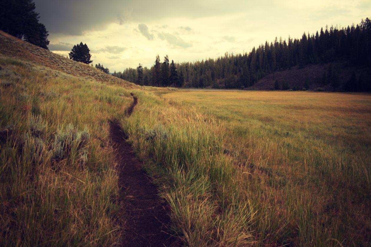 "Free photo ""Grass"" by Drew Geraets"